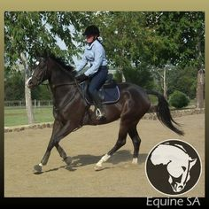 Horses For Sale, over 50 Breeds, 30 Disciplines/Sports, Stud Farms, Stallion Services Stud Farm, Horses For Sale, Thoroughbred, South Africa, Clever, Animals, Animales, Animaux, Animal