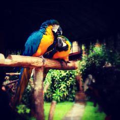 #iphoneonly #natureonly #hubnature #instagood #birds #webstagram #birdstagram #all_shots #birdsofinstagram #hot_shotz #statigram #photooftheday #gang_family #photowall #ig_watchers - @miss_ecy- #webstagram