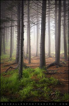 Into The Light - Black Balsam Fog by Dave Allen Photography, via Flickr