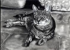 Kitty by Miriam Pschellok Living Treasures, Pencil Drawings, Kitty, Deviantart, Cats, Animals, Little Kitty, Gatos, Animales
