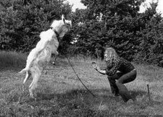 Robert Plant of Led Zeppelin and his goat