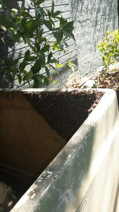 Bee renoval in Johannesburg, removed bees in Craighall Park in a,pool pump