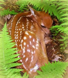 New life in the forest #woodland #wildlife #nature