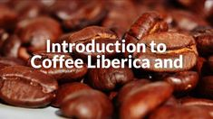 Introduction to Coffee Liberica and Excelsa Beans Coffee Maker Reviews, Coffee Beans, Scout Knots, Vegetables, Videos, Amazing, Food, Essen, Vegetable Recipes