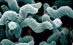 Campylobacter coli in NZ, 2005-2014