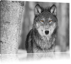 wunderschöner wachsamer Wolf schwarz/weiß Format: 120x80 auf Leinwand, XXL riesige Bilder fertig gerahmt mit Keilrahmen, Kunstdruck auf Wandbild mit Rahmen, günstiger als Gemälde oder Ölbild, kein Poster oder Plakat: Amazon.de: Küche & Haushalt