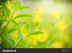 Closeup Nature View Green Leaf On ภาพสต็อก (แก้ไขตอนนี้) 1043016193 Nature Green, Green Leaf Background, Nature View, Green Leaves, Stock Photos
