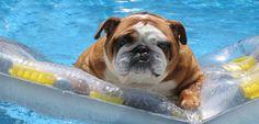 Evita el golpe de calor en el perro - http://www.mundoperros.es/evita-golpe-calor-perro/