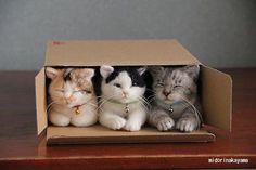 Katteneigenaars zullen het zeker herkennen: geen enkele kat kan aan een kartonnen doos weerstaan. Groot of klein, geen enkele doos is veilig als er een kat in de buurt is. Wij hebben ons altijd afgevraagd hoe dat komt, en kijk eens aan: ook wetenschappers vonden die vraag boeiend genoeg om er studies aan te wijden.