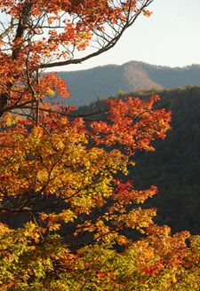 Fall Color Reports -- Updated weekly + where to see color + hikes + drives + deals!