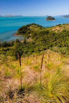 QUEENSLAND (Mackay/Proserpine): Enjoyed a day trip only on South Molle Island - good walking and snorkeling.