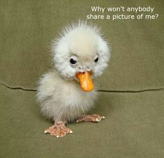 Even an ugly duckling has purpose in God's plan. Besides, he's kind of cute!! More
