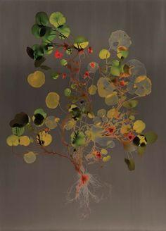 Adam Fuss - UNTITLED, cibachrome print on MutualArt.com