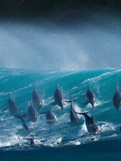 Dolphins, Port St Johns, South Africa via Craig Holmes on Flickr