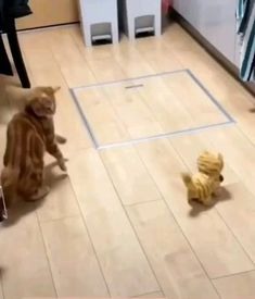 Cute Funny Babies, Funny Cute Cats, Cute Cat Gif, Cute Funny Animals, Cute Baby Animals, Cool Cats, Funny Animal Memes, Funny Animal Videos, Funny Animal Pictures