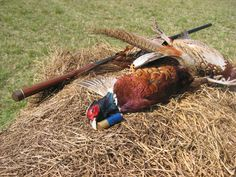 1000+ images about Colorado Outdoors on Pinterest | Pheasant Hunting ...