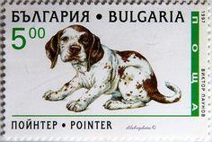Bulgaria.  POINTER.  Scott 3969 A511, Issued 1997 Feb 25, Litho., Perf. 13,  5. /ldb.