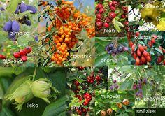 Stuffed Peppers, Vegetables, Garden, Blog, Garten, Stuffed Pepper, Lawn And Garden, Vegetable Recipes, Gardens