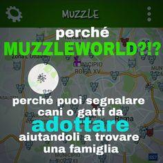 scarica subito l'App!👇 X android👇 https://play.google.com/store/apps/details?id=com.muzzle.muzzleapp X iphone 👇 https://itunes.apple.com/us/app/muzzleworld/id1069640866?l=it&ls=1&mt=8  #muzzle  #muzzleworld  #smarrito