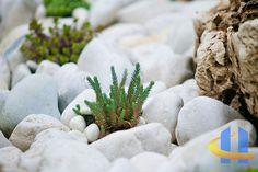 Große Flusskiesel Plants, Flora, Plant, Planting