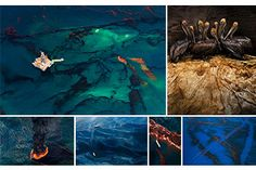 Wildlife Photographer of the year 2011 Daniel Beltra