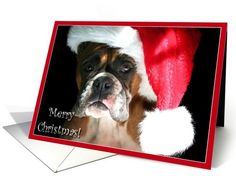 Merry Christmas Boxer in Santa Hat card  #christmas #cards #dog #boxer #boxers