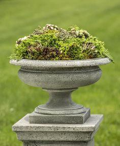 Moss & succulents