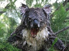 17 NOPE Animal Pics That Prove Australia Is Absolutely Terrifying! - Swifty.com