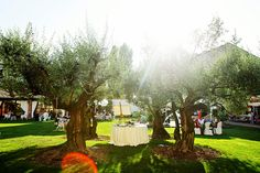 Musella - beautiful wedding venue with a large garden and very old olive trees in the centre, Verona, Italy  www.samorovan.com