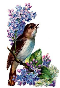 Vintage - Bird with Lilacs -