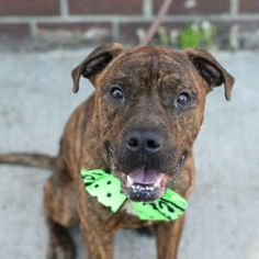 LOWS - TO BE DESTROYED TODAY  - 9/14/16.