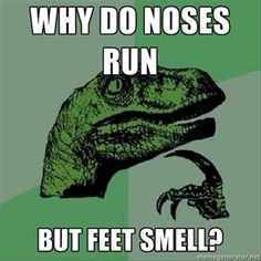 One Liners | ... Day why do noses run, but feet smell, funny one liners - Dump A Day