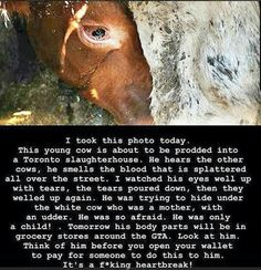 Please read & contemplate if eating flesh is worth this treatment to God's Creatures: Stop supporting violence! #NoAnimalUse #GoVEGAN