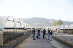 The JTV Crew in Santa Paula CA with the Ortiz Family at Joseph & Sons. filming the CA Grown Experience. Santa Paula, California Location, Family Flowers, The Ca, Delphinium, Flower Farm, Joseph, Sons, Delphiniums