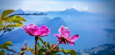 Wandern auf der Rigi – der Königin der Berge Hiking, Plants, Photography, Travel, Transmission Tower, Rock Path, Road Trip Destinations, Mountains, Viajes