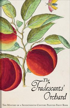 The Tradescants' Orchard The Mystery of a Seventeenth-Century Painted Fruit Book Barrie Juniper, Hanneke Grootenboer