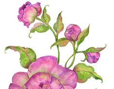 "Check out new work on my @Behance portfolio: ""watercolor peony flowers"" http://be.net/gallery/63750869/watercolor-peony-flowers"