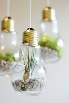 DIY Succulent hanging terrarium garden made from light bulbs under $20