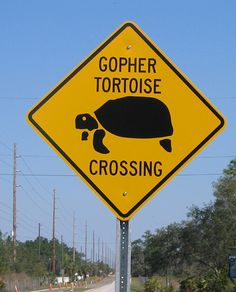 The Galapagos Tortoise Fact Sheet Cape Coral Florida, Tortoise Care, Girlfriends Getaway, Captiva Island, Easter Island, Street Signs, Fort Myers, Florida Beaches, Heaven On Earth