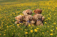 Teddy Bear Images, Teddy Bear Pictures, Giant Teddy Bear, Teddy Bears, Love Bear, Panda, Cute, Pakistani Dresses, Headers