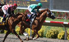 Del Mar Racetrack Horses Suffering in 2014 Thoroughbred, Horse Racing, Ticket, Horses, Sports, Animals, Vip, Romance, Running