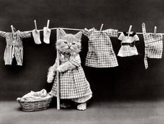 "1914. ""Cat in housedress costume at clothesline with basket of laundry."" No doubt washing the cat's pajamas :)"