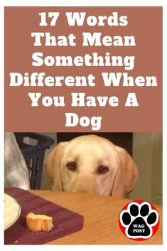 Fact: Dogs change yo Fact: Dogs change your life (and vocabulary) for the better. Horse Dance, Black Labrador Retriever, Dog Treats, Rescue Dogs, Puppy Love, Dog Training, Dog Food Recipes, Vocabulary, Meant To Be