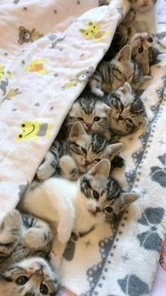 Baby Animals Super Cute, Cute Baby Cats, Cute Cat Gif, Cute Little Animals, Cute Cats And Kittens, Cute Funny Animals, Kittens Cutest, Cute Cat Video, Cat Fun