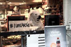 Eftersom Arktis isar har smält tvingas Icebjoern leta bostad precis som alla andra. SaveTheArctic.org/ILoveArctic