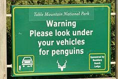 Silly road signs around the world: Spot the hidden penguin. We've heard of cats resting under cars but never thought we'd have to check for penguins. Funny Road Signs, Fun Signs, Penguin World, Weird But True, Cartoon Network Adventure Time, Its A Wonderful Life, Vintage Advertisements, Make You Smile, Penguins