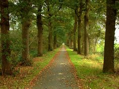 I love tree lined paths. Show me the right path, O LORD; point out the road for me to follow.