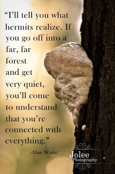 Huge Tree Fungus, Alan Watts Quote: this is so true - love the thought. Zen Quotes, Quotes To Live By, Change Quotes, Zen Sayings, Everything Is Connected, Alan Watts, Mindfulness Meditation, Meditation Quotes, Wedding Humor