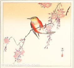 Ohara Koson: Orange Bird and Cherry Blossoms - Early 20th century