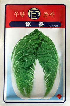 Vegetable seeds jing spring F1 Chinese cabbage Child fast growth and cabbage yellow teeth white 10 g color package